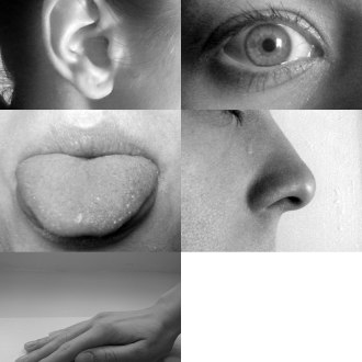 A picture that includes eye, ear, tongue, nose and hand, representing the sensory organs for the five classical senses: vision, hearing, taste, smell and touch.